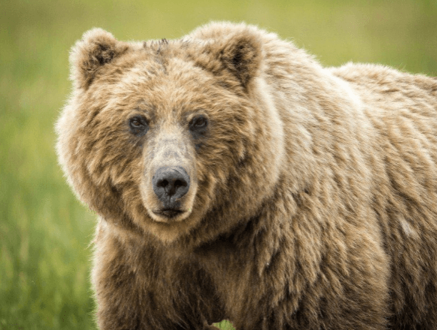 Best handguns for Grizzlies